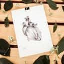 corazon sin tregua ilustracion a lapiz sobre papel raquel carrero decoracion nordica detalle hojas