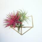 HANGING PLANTS plantas colgantes cactus suculantes decorar con plantas pipolart fox