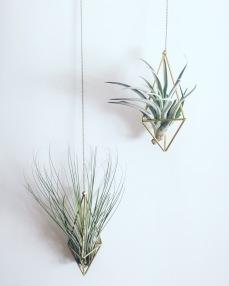 HANGING PLANTS plantas colgantes cactus suculantes decorar con plantas pipolart pendulum doble plantas aereas otras