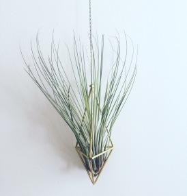 HANGING PLANTS plantas colgantes cactus suculantes decorar con plantas pipolart pendulum plantas aereas otras