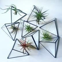 terrario plantas aereas cactus suculantes decorar con plantas pipolart ivy