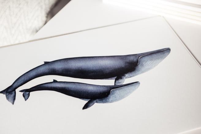 lamina print ballena orca acuarela nathalie ouederni pipol-art.jpg