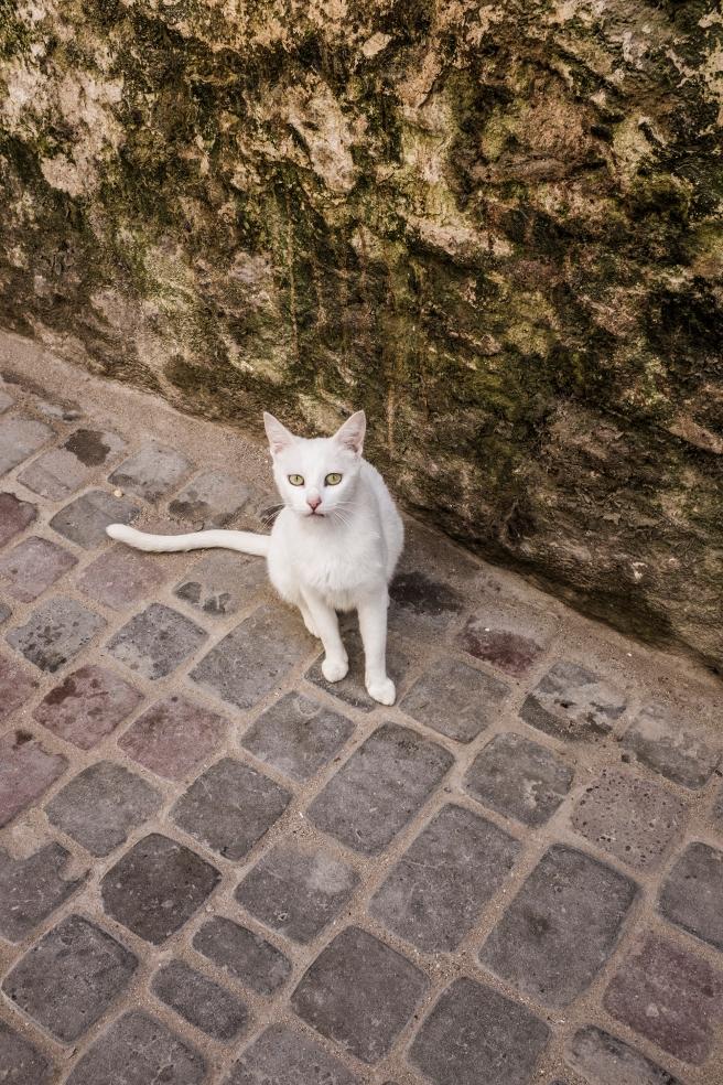 viaje 5 dias marrakech emilio jimenez los gatos en la medina