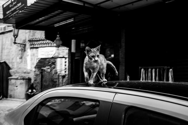 viaje 5 dias marrakech emilio jimenez medina gatos