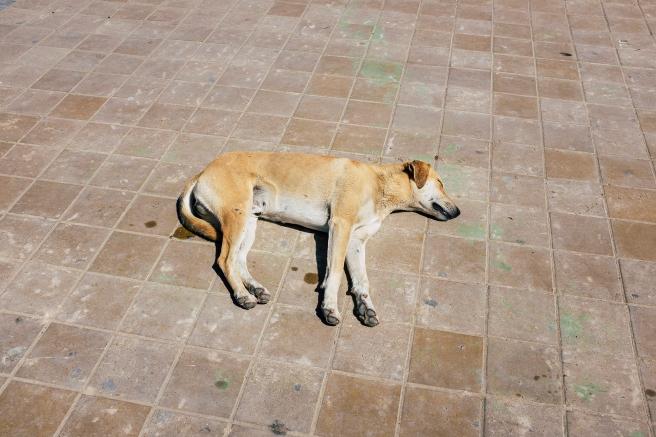 viaje 5 dias marrakech emilio jimenez perro descansando en Essaouira