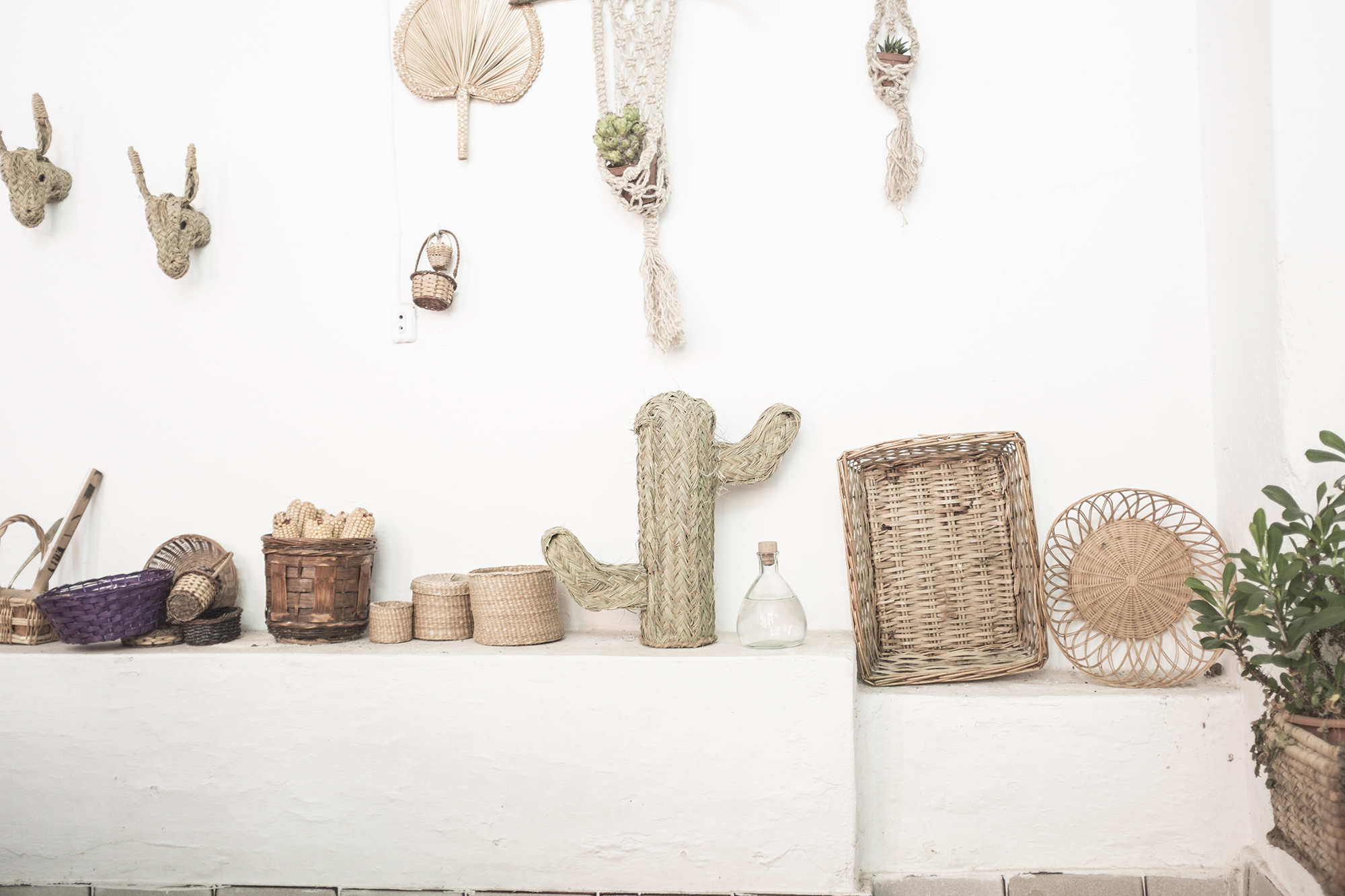 cactus natural mimbre palma hecho a mano artesania española